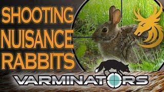Shooting Rabbits And Land Management