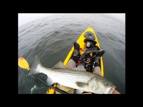 Striped Bass Fishing With Tube And Worm Using Gulp