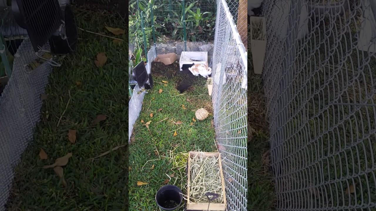 my backyard rabbits pen u0026 tunnel run youtube