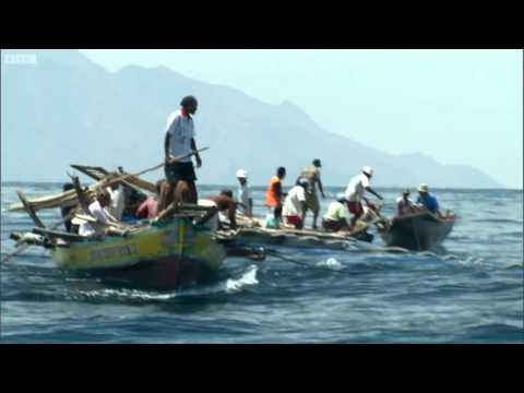 Sperm Whale Hunt   Human Planet   BBC