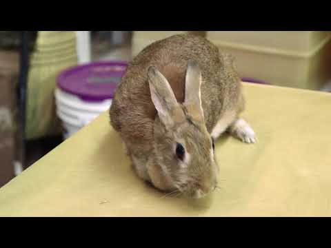 Rehabbing rabbits since 1945 at Lake Erie Nature & Science Center