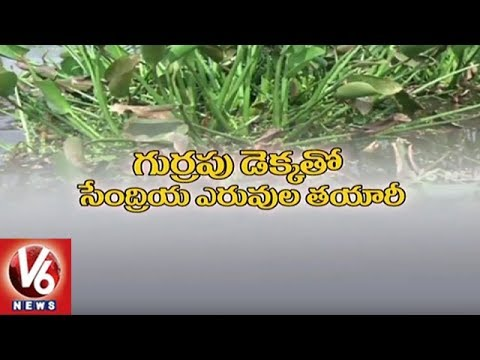 Special Story On Manufacturing Of Organic Manure With Horseshoe Weed   Hyderabad   V6 News