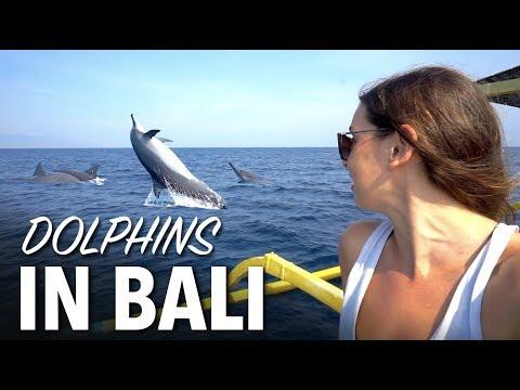 Dolphins In Bali - Lovina Beach North Bali Tour
