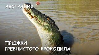 Мир Приключений - Прыжки гребнистого крокодила. Нац. Парк Какаду. Австралия. Crocodiles Jumping.(Весь цикл фильмов: http://mir-prikliuchenii.com/movies В планах: http://mir-prikliuchenii.com/plans Фрагмент из фильма