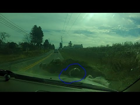 Perfectly Timed Deer Hit By Car (Original Video)