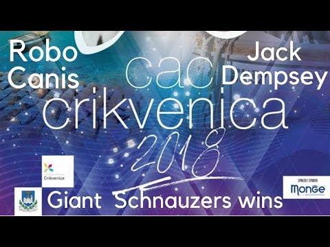 Giant Schnauzer wins CAC HR title on dog show CAC Crikvenica 2018 - BlackDogProduction