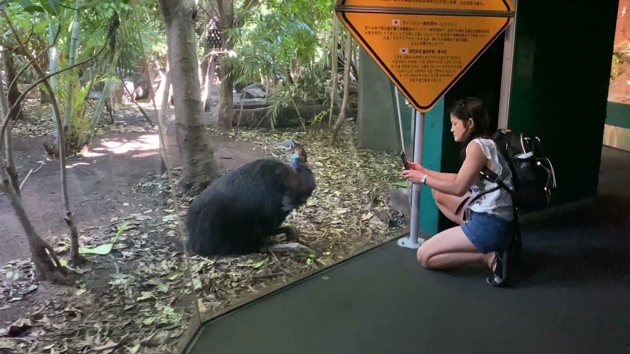 10. Sydney | Australian wildlife - kangaroos, wallabies and wombats, koala and snakes