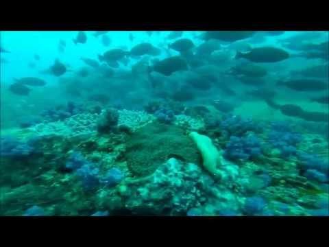 Mozambique Vilanculos Spearfishing Trip