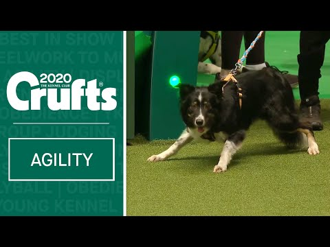 Agility  Crufts Team Large Final - Part 1 | Crufts 2020