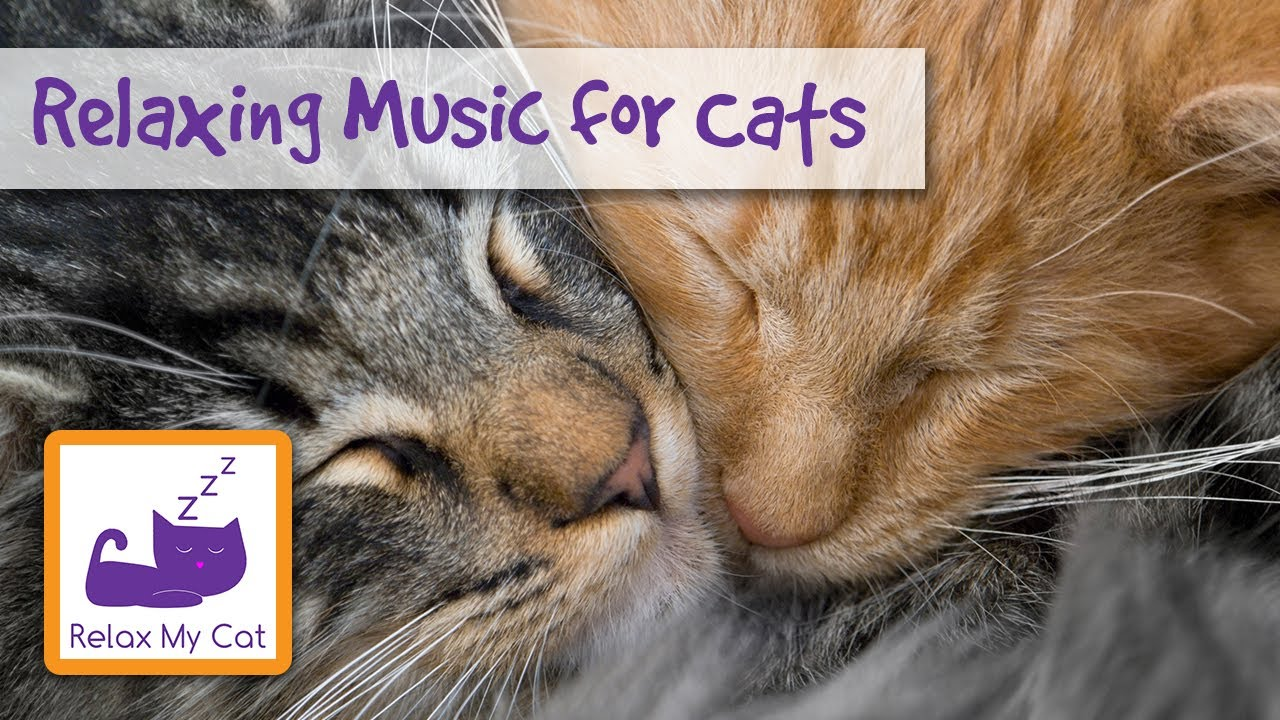 Music For Cats Music To Help Your Cat Relax Youtube