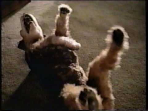 Geico Direct  - Car Insurance Commercial  - Dog Laughing (1998)