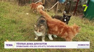 В Одессе появились дома для кошек у моря