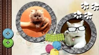 Кошачья песня автор работы Tanya Roza