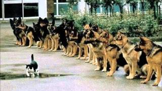 German Shepherd Puppy Training Tips - Make German Shepherd Dog Puppy Training Easy