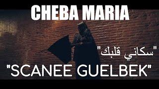 cheba maria   scanee guelbek exclusive music video الشابة ماريا   سكاني قلبك حصرياً