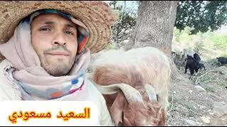 Gasba chaoui - Said Messaoudi - Imetawen Ahuha