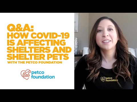 Fostering & Adopting Shelter Pets During COVID-19   Petco & Petco Foundation