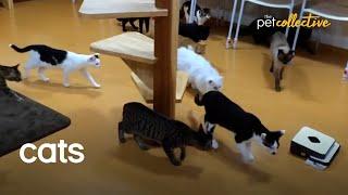It's a Cat's World!