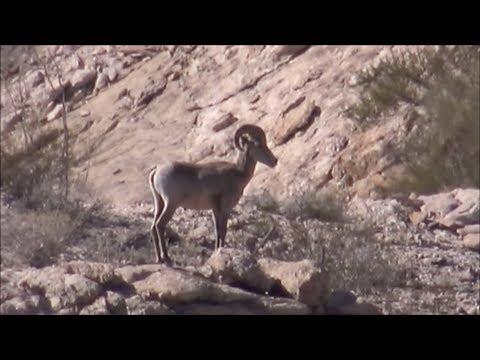Journey On El Camino Del Diablo: Video 4