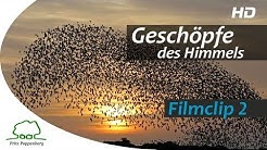 """GESCHÖPFE DES HIMMELS - Filmclip 2 - """"Formationsflug der Stare"""" - deutsch"""
