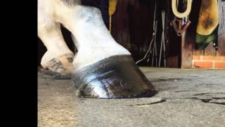 EVA Leather Therapeutic Shoes Hoof Transformation