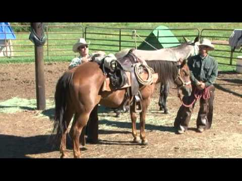 Horse Mule Packing With Saddle Panniers Youtube