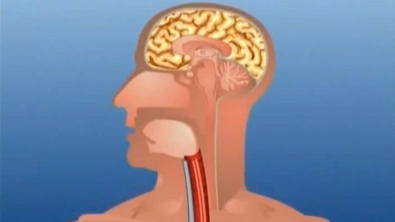 Learn Human Body Part Internal Kids Educational Video Youtube