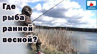 Кто сказал что рыба сейчас выходит на мель погреться - рыбалка на поплавок на озере...
