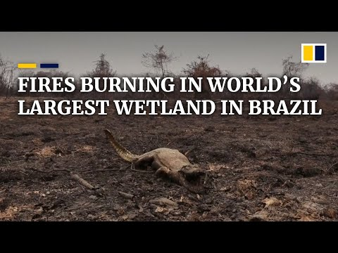 Fires ravaging world's largest wetland and large parts of th