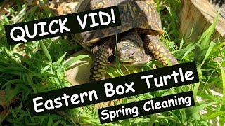 QUICK VID Eastern Box Turtle enclosure spring clean