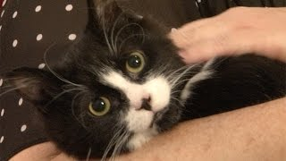 Best Friends Animal Society Utah - Mouse finds a home.