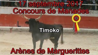 Download Video 2017 09 17 Timoko MP3 3GP MP4