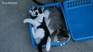 The Feral Cat And The Feral Kittens Playing With And In The New Baskets thumbnail