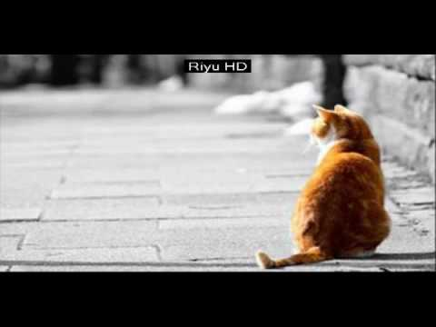 Funny Cats - A Funny Cat Videos Compilation 2016 || funny cat picture