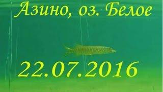 Вітебська область, п. Азино, оз.Біле, 22 07 2016 Чиста прозора вода