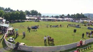 Gwartheg Llaeth - Pencampwriaethau | Dairy Cattle - Championships