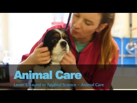 Animal Care  - Bray Institute of Further Education