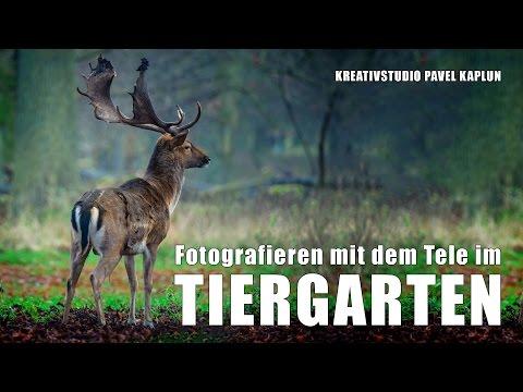 Fotografieren im Tiergarten mit dem Tele