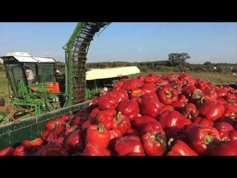 Niesamowite Maszyny Rolnicze W Pracy
