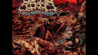 Top 3 Brutal Death Metal Bands