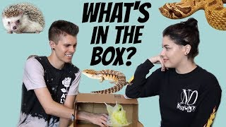 Download WHAT'S IN THE BOX CHALLENGE! | Feat. Taylor Nicole Dean + All of Her Animals Mp3 and Videos