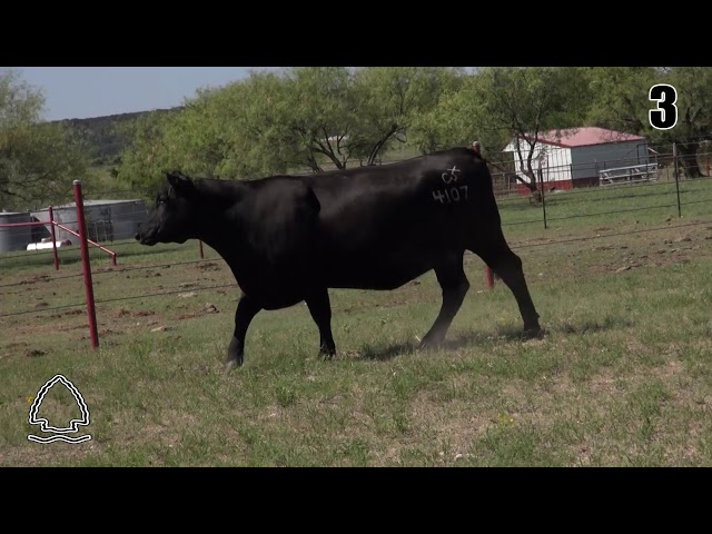 Pearcy Angus Ranch Lot 3