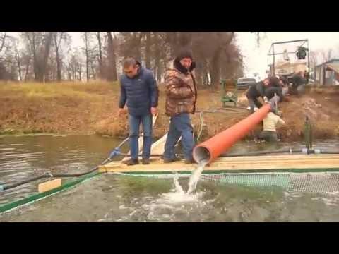 парк лотос рыбалка
