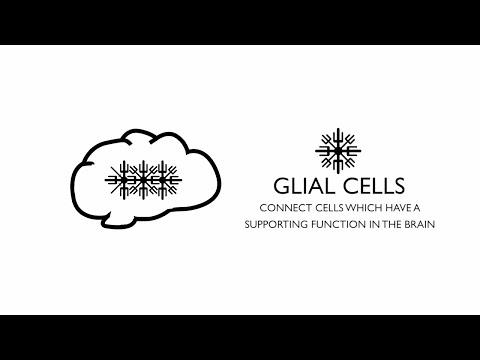 Understanding Glioblastoma Brain Cancer
