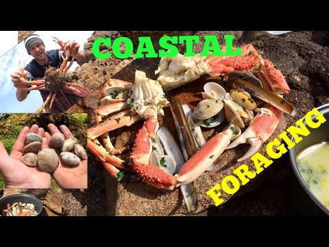 Coastal Foraging , Spider Crab , Venus Clams, Razor Clams / Cooking on A Beach