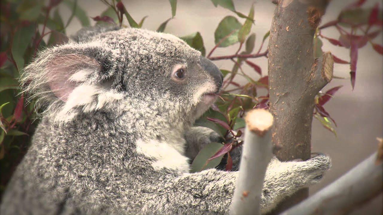 San Diego Zoo Kids - Herbivores Eating - YouTube