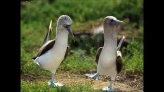 Животные тоже умеют танцевать  Фотонарезка прикольных танцующих животных