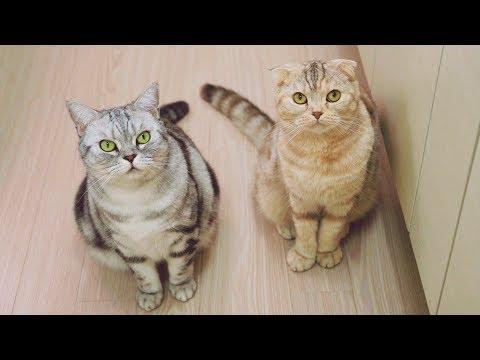 고양이가 집사에게 간식을 얻어내는 방법