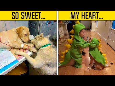 dogs-pics-that-will-make-your-day-better