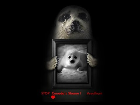Canada Seal Hunt - Cruel And Senseless